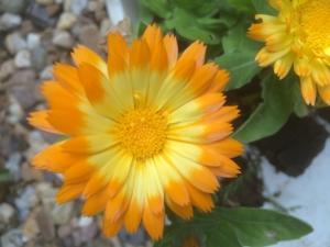 2015-06-02 15.55.18 15.05.08 oopsy daisy