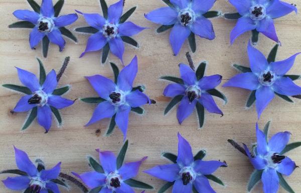 Tuin 4: 6 m2 met 10.000 bloemen