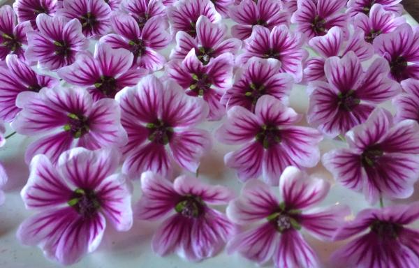 Tuin 6: 8 m2 met 15.000 bloemen