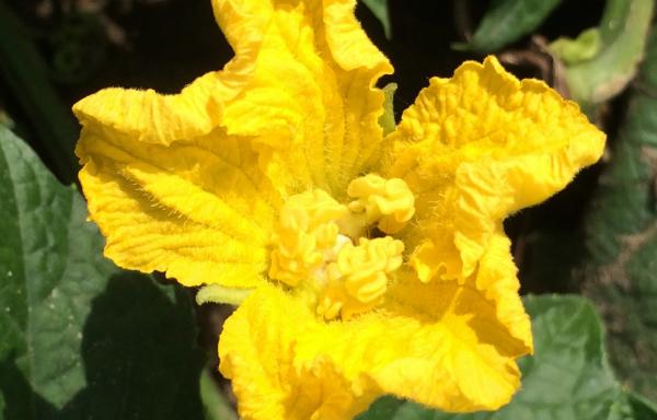 Fleur Latoure