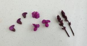 2015-09-07 11_Fotor tops 3 paars