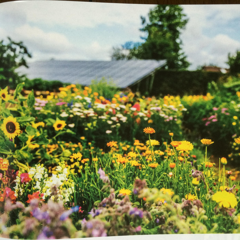 Een kijke in de proeftuinen van Cuisine Eetbare Bloemen, waar 180 soorten worden getest.