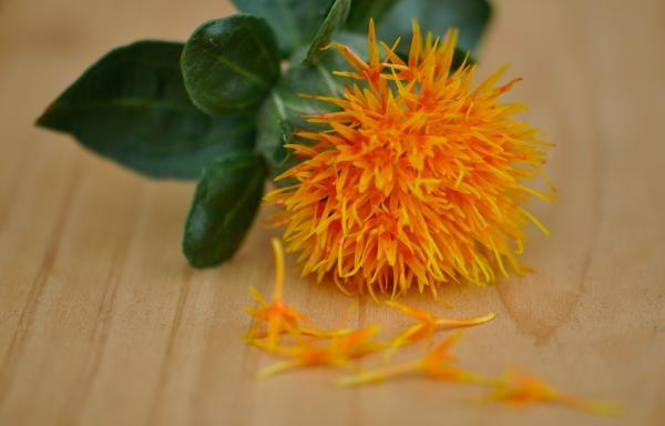 Maxima bloem