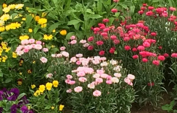 Aanleg eetbare bloementuintjes